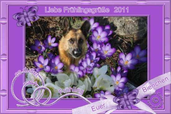 An den Beitrag angehängtes Bild: http://www.rex-und-rocco.de/images/imag2011/Fruehling2011.jpg