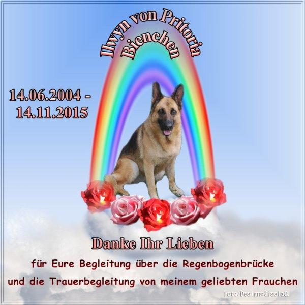 An den Beitrag angehängtes Bild: http://www.rex-und-rocco.de/images/imag2015/RGB-Biene-Danke-HP.jpg