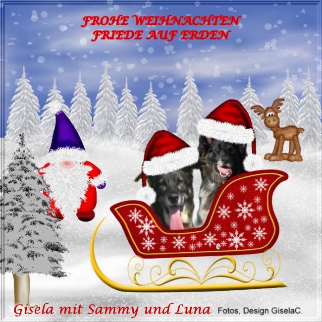An den Beitrag angehängtes Bild: http://www.rex-und-rocco.de/images/imag2017/Weihn2017.jpg