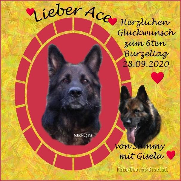 An den Beitrag angehängtes Bild: https://www.rex-und-rocco.de/images/imag2020/Ace_6terBurzel_28-09-2020.jpg