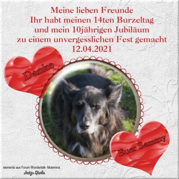 An den Beitrag angehängtes Bild: https://www.rex-und-rocco.de/images/imag2021/Sammy-Geb_12-04-2021_Danke.jpg